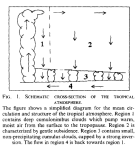 Convection-subsidence-Minschwaner-McElroy-1992